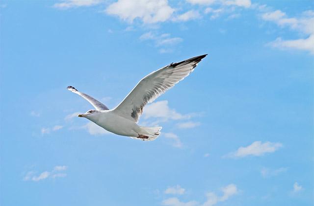 Seemöwe im Flug im Cala Ginepro-Himmel