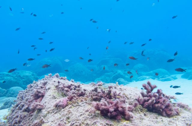 Schnorcheln in Cala Ginepro, auf Sardinien, mit vielen Fischen im Meeresboden