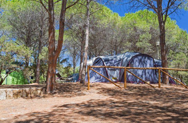 Zelte im Pinienwald auf dem Campingplatz Cala Ginepro