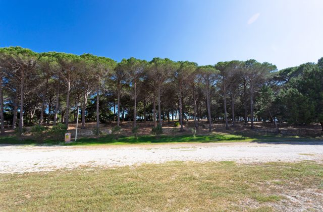 Pitches under the pine forest at Camping Cala Ginepro