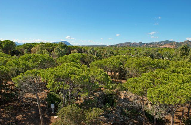La fitta pineta di Cala Ginepro, a Orosei, nella costa est della Sardegna