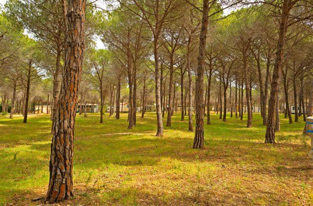 Piazzole nella pineta del Camping Cala Ginepro, in Sardegna